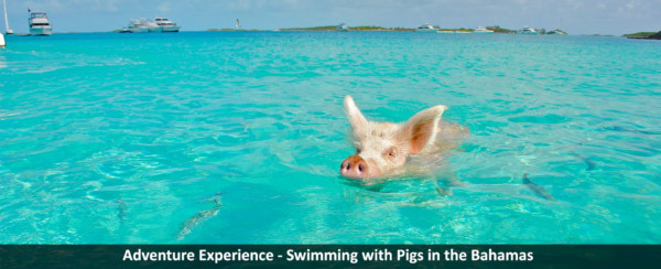 Adventure Experience - Swimming with Pigs in the Bahamas