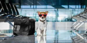 United Bans Many Pets From Cargo Holds